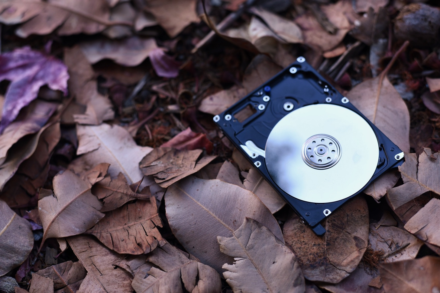 A hard disk lying on some leaves.