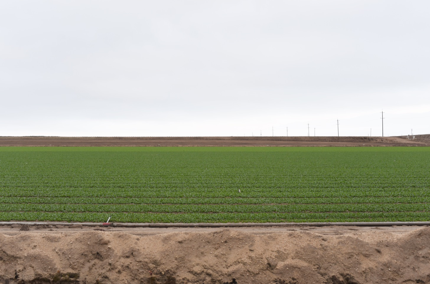 Fields in Salinas.