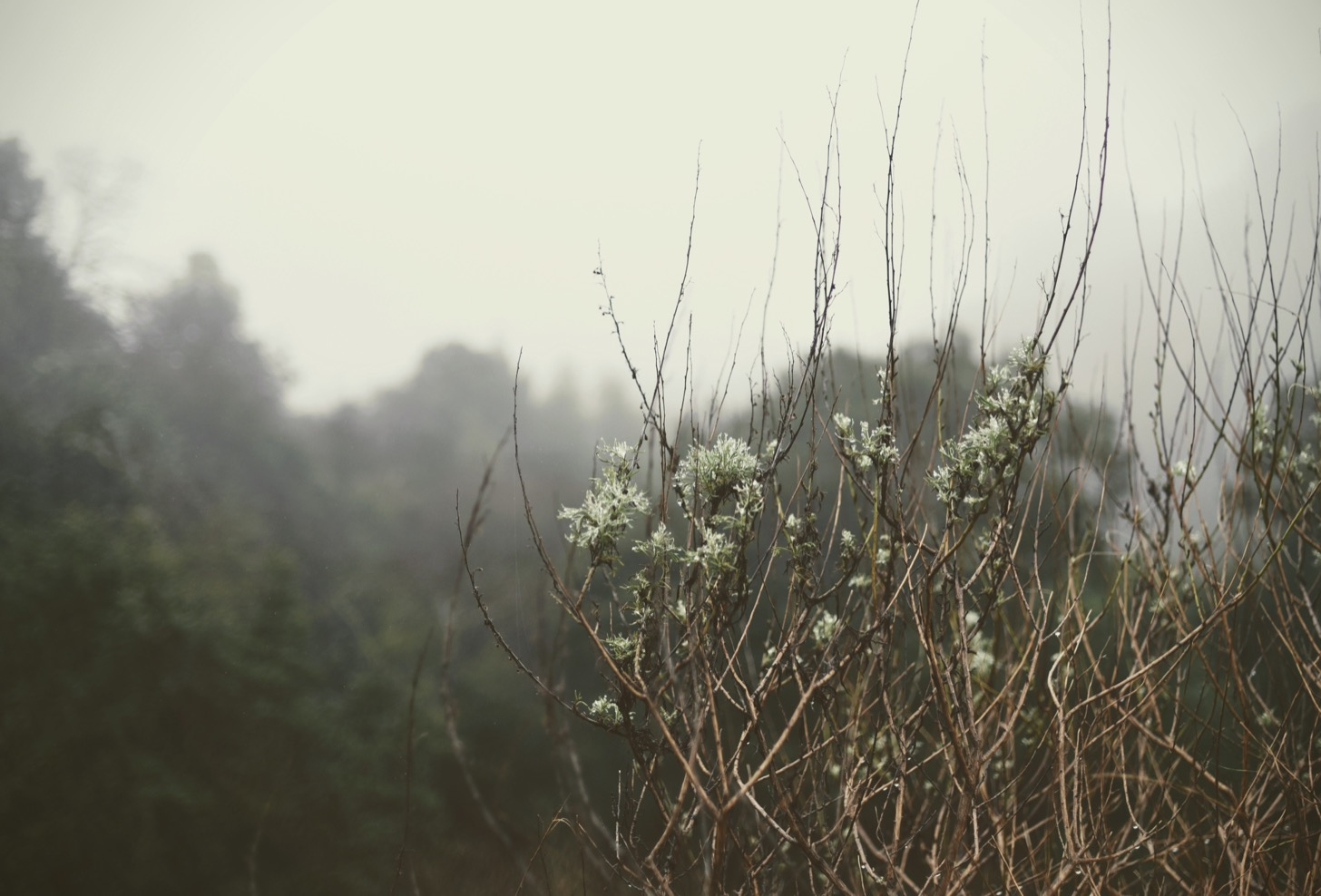 Tree branches and flowers in the fog.